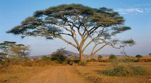 Afrika zu Gast im Kirchenladen Sinthern