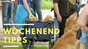 Tierischer Gottesdienst, 100 Kinder, pilgernde Männer, Church Rock Night und eine Fahrradtour – die Wochenend-Tipps