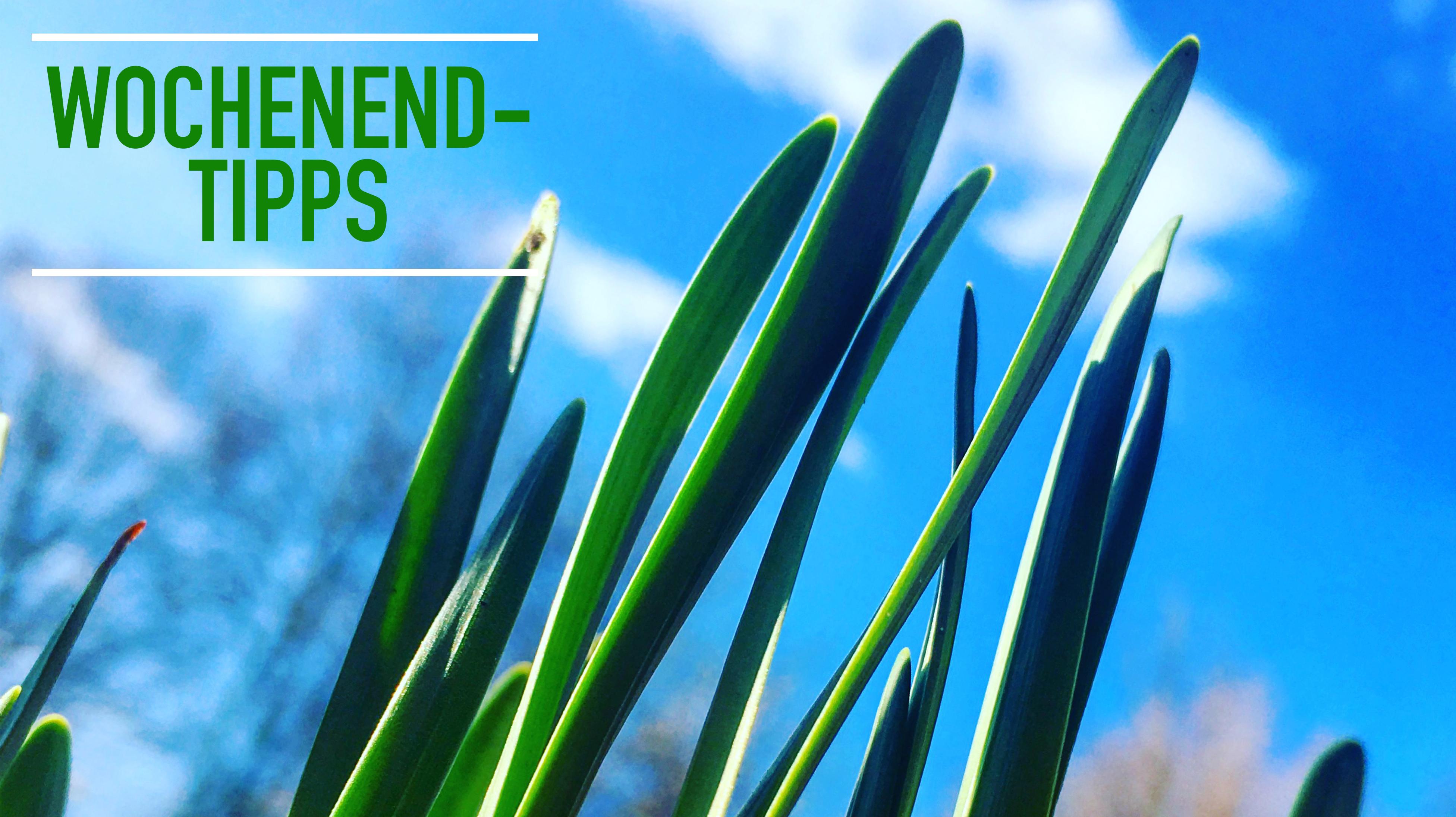 Wochenendtipps: Lesespaziergang mit Maibowle, Frühlingsmusik mit Grillen, Vortrag über Beginen(höfe) und Chorkonzert