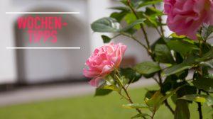 """Wochentipps: """"Escht Kabarett"""", Choräle in der deutschen Romantik, """"Die Rose"""" in der Christuskirche, """"Sommergespräche in Brühl"""" und Bildvortrag"""